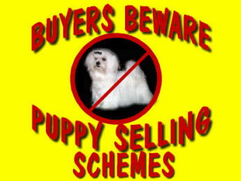 Stolen Pictures from personal websites are being used in puppy selling schemes on puppy selling websites such as Puppyfind.com
