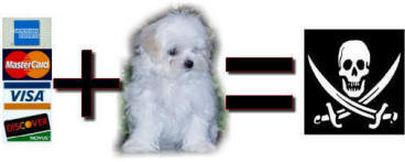 Maltese Breeders who accept credit cards & PayPal are huge red flags when searching for your new Maltese puppy.