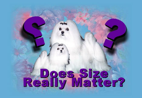 Maltese Dog and Puppy Size/Weight...does it matter??