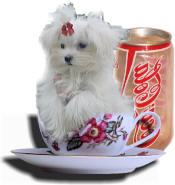 "The term ""teacup/tcup/t-cup Maltese"" has become a sales ploy to charge more money�Teacup/tcup/t-cup Maltese, Micro-Teacup Maltese, Micro-Mini Maltese, Toy Maltese are just a few terms to sell non-standard representatives of the breed to the unsuspecting general public. Don�t fall prey to a sales ploy!!! Be informed!!!.....teacup maltese,tcup maltese,t-cup maltese,micro-mini maltese,toy maltese,micro maltese,micro-mini maltese,maltipoo,malti-poo,poo,designer dogs,teddy bear puppy,teddybears puppy, teacup/tcup/t-cup maltese puppy,teacup/tcup/t-cup maltese breeders,registered teacup/tcup/t-cup maltese puppies,teacup/tcup/t-cup maltese puppies for sale,teacupmaltese dogs for sale"